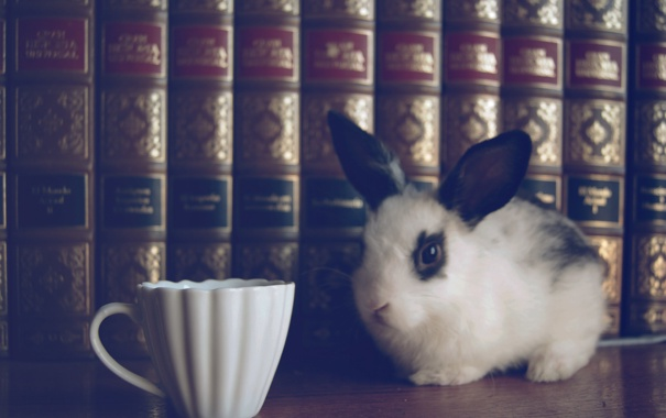 Фото обои книги, кролик, чашка