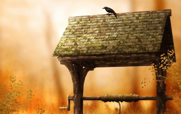 Фото обои птицы, природа, птица, обои, колодец