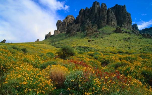 Фото обои небо, трава, пейзаж, цветы, горы, скалы