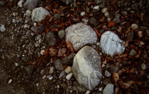 Фото обои листья, макро, природа, камни, фото, обои на рабочий стол