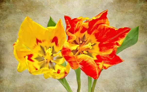 Фото обои цветы, лепестки, холст, тюльпан