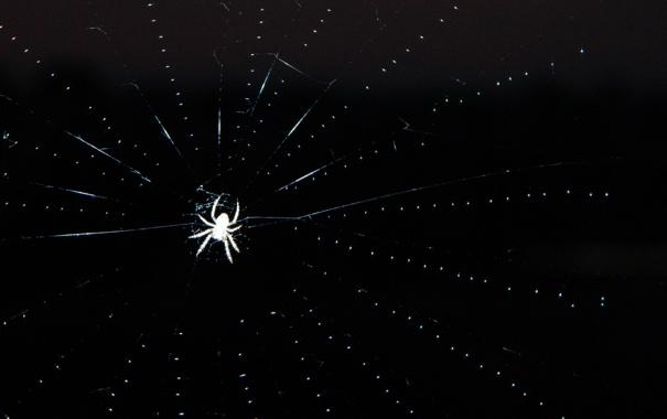 Фото обои макро, ночь, паутина, паук, spider