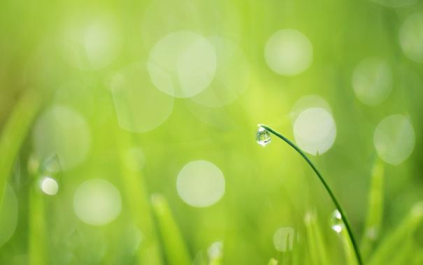 Фото обои зелень, трава, блики, капля, травинка
