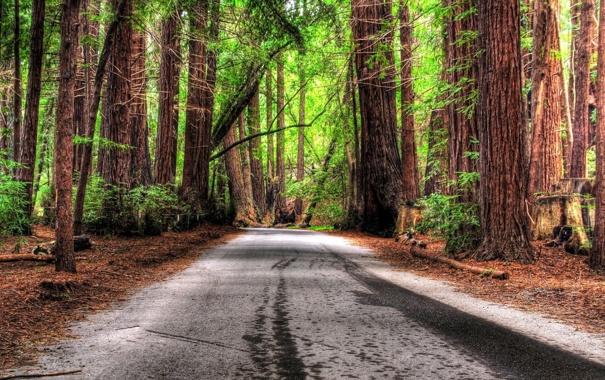Фото обои дорога, обои, деревья, романтика, фото, природа, лес