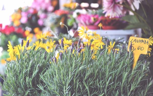 Фото обои цветы, надпись, лаванда, ценник
