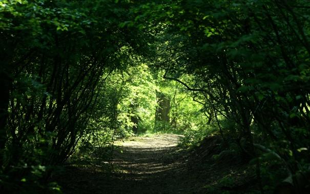 Фото обои природа, заросли, дорожка, проход, арка, алея