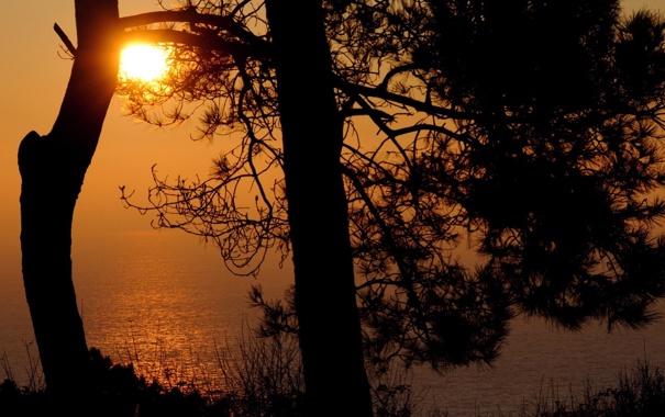 Фото обои море, небо, вода, солнце, свет, деревья, закат