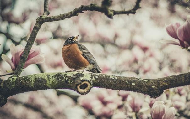 Фото обои цветы, птица, боке, филиал