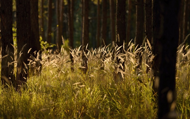 Фото обои лес, лето, трава, природа