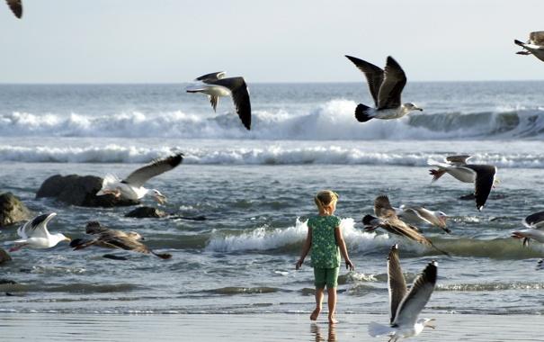 Фото обои море, птицы, девочка
