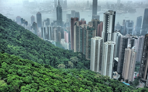 Фото обои деревья, китай, дома, небоскрёбы, china, гонгонг, hong hong