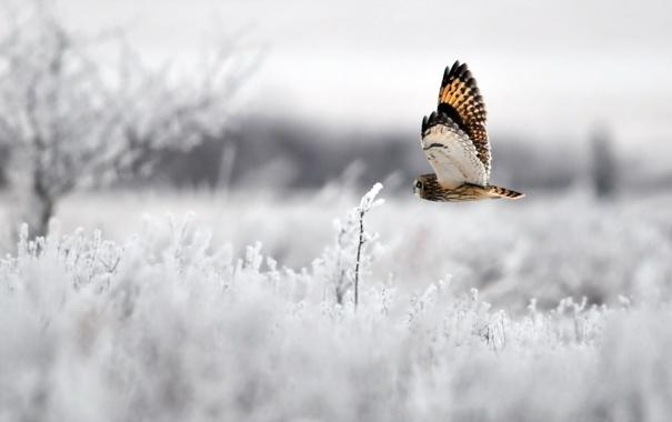 Фото обои зима, сова, птица