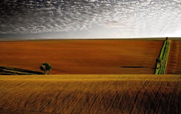 Фото обои небо, облака, деревья, дерево, холмы, поля, вечер