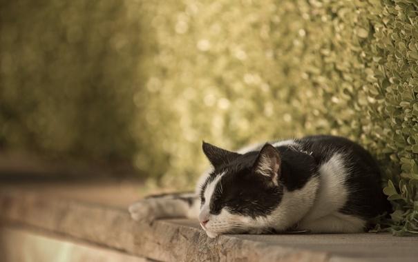 Фото обои кошка, отдых, улица