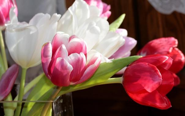 Фото обои фото, Цветы, Тюльпаны, Крупным планом