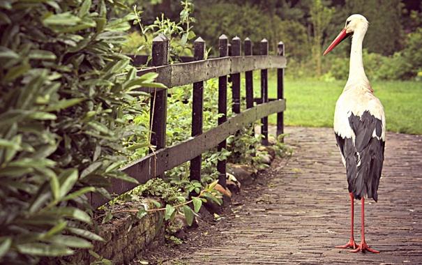 Фото обои птица, забор, аист