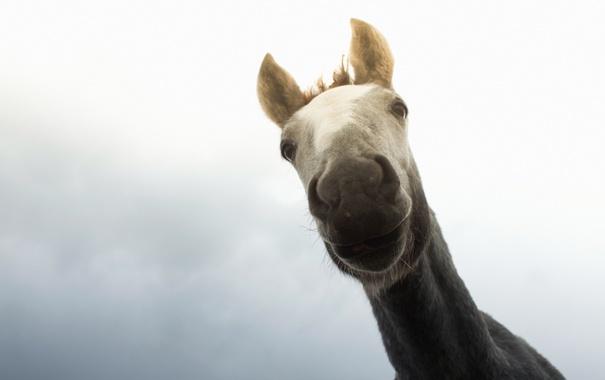 Фото обои морда, макро, конь