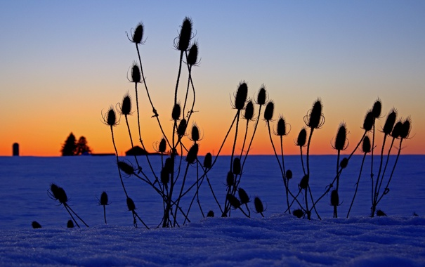 Фото обои зима, поле, небо, трава, снег, растение, горизонт