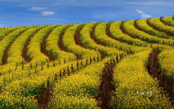 Фото обои поле, небо, облака, пейзаж, цветы, обои