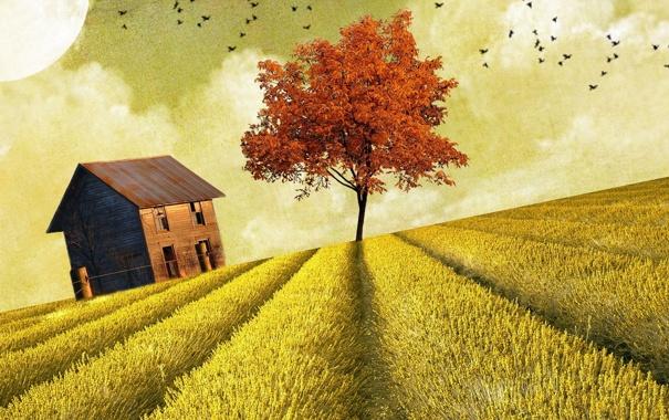 Фото обои поле, дом, стиль
