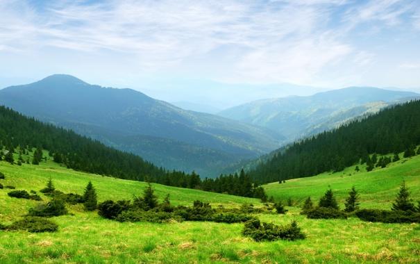 Фото обои трава, деревья, холмы, природа, горы, зелень