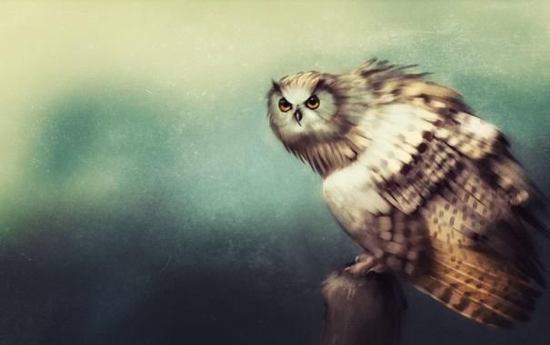Фото обои взгляд, сова, птица