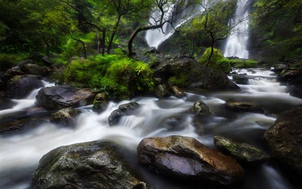 Фото обои лес, деревья, скала, река, камни, водопад, поток