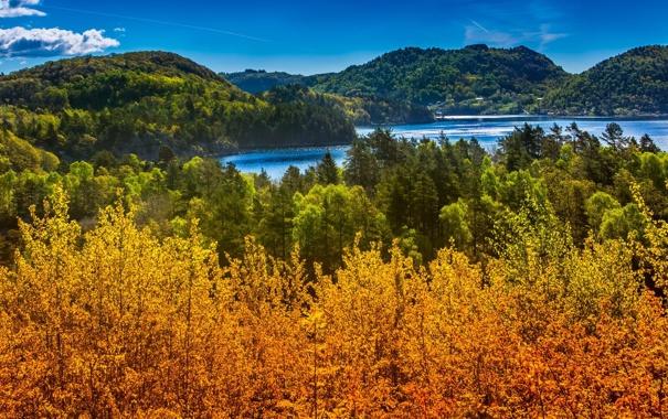 Фото обои лес, река, блики, лето, природа, озеро