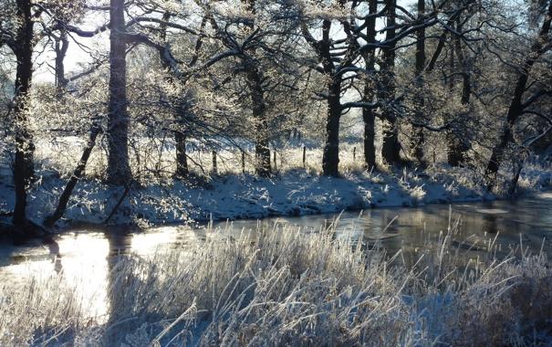 Фото обои зима, трава, снег, деревья, река, забор, солнечно
