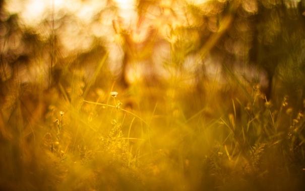 Фото обои лето, трава, солнце, макро, свет