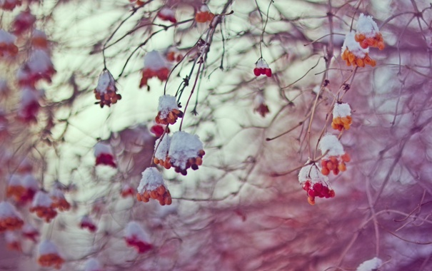 Фото обои небо, зима, холод, февраль, боке, ягоды