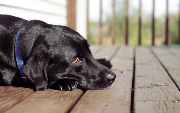 Фото обои друг, взгляд, собака