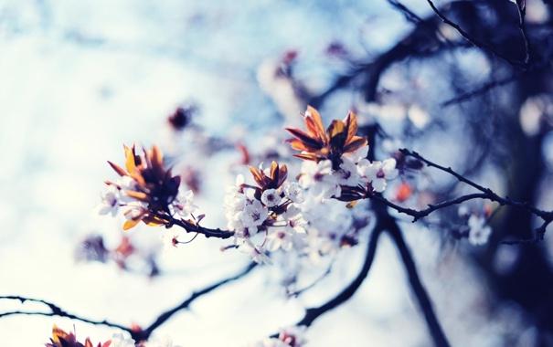 Фото обои листья, цвета, цветы, природа, фото, обои, растения