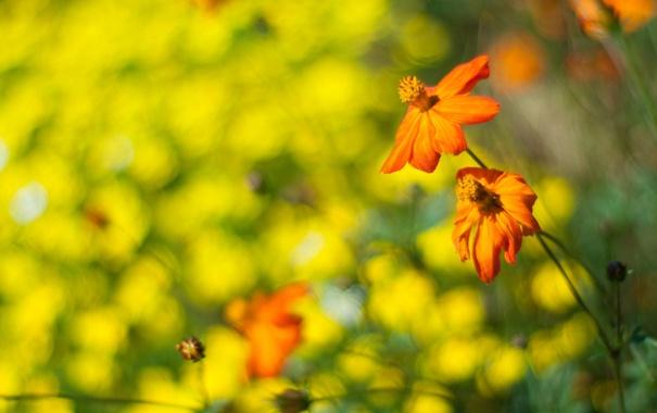 Фото обои оранжевый, цветы, зелень, макро, боке