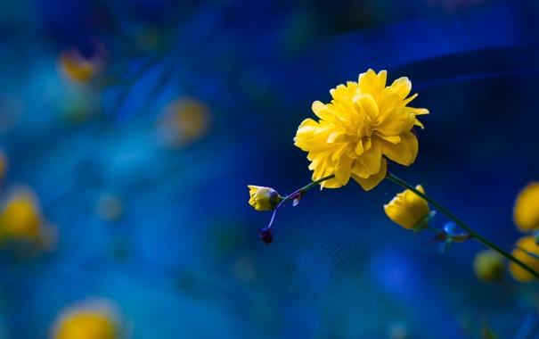 Фото обои цветок, природа, паутина, лепестки, стебель
