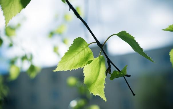 Фото обои лето, лист, ветка