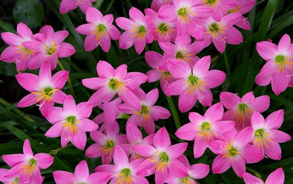 Фото обои природа, сад, лепестки, клумба