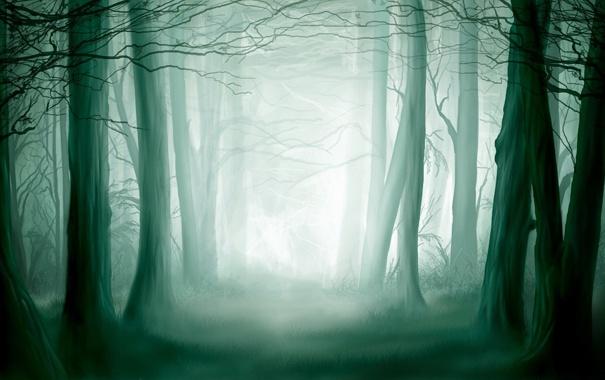 Фото обои лес, свет, чаща