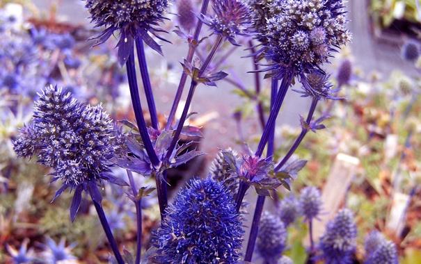 Фото обои цветы, ветки, растение, шишки, колючка