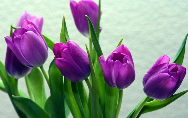 Фото обои цветы, лепестки, тюльпаны