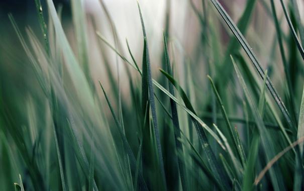 Фото обои зелень, трава, макро, растение