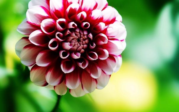 Фото обои цветок, лето, фото, обои