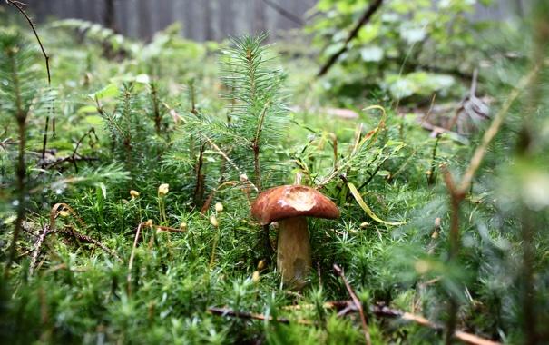 Фото обои лес, гриб, дырки