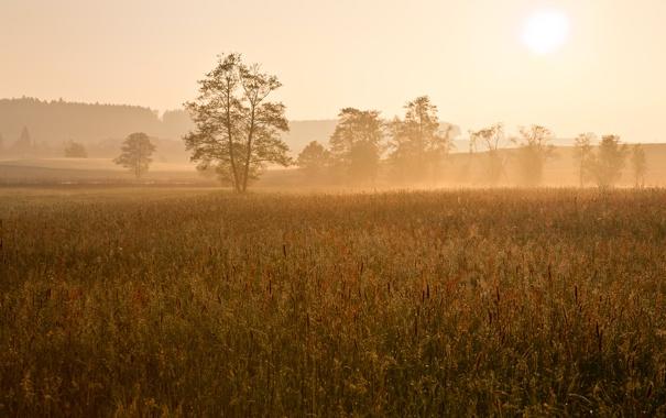 Фото обои поле, солнце, деревья, туман, рассвет, утро, дымка