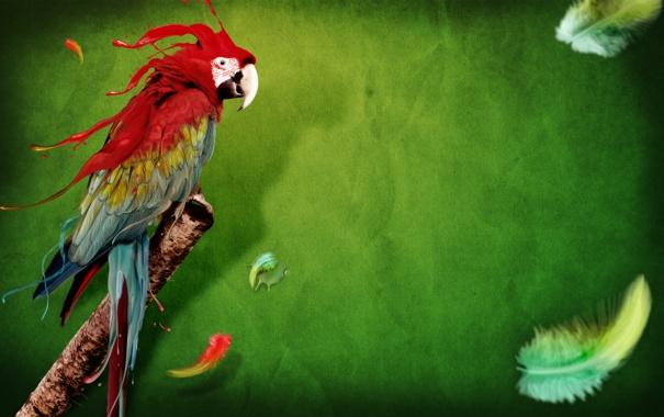 Фото обои фон, краски, перья, Попугай