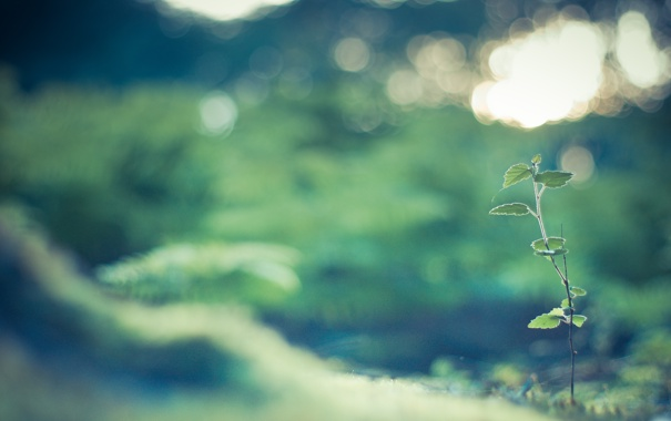 Фото обои зелень, трава, листья, макро, свет, природа, блики