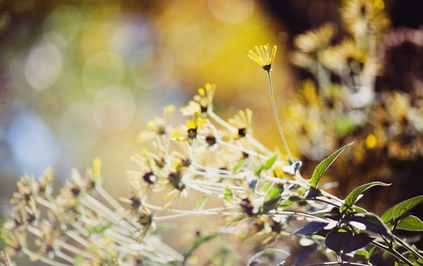 Фото обои макро, цветы, природа