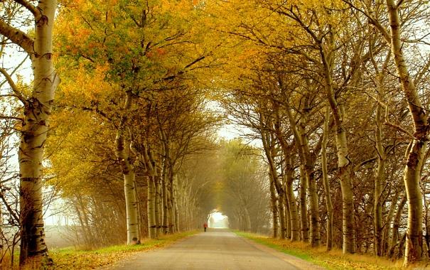 Фото обои дорога, осень, листья, деревья, человек, аллея, пешеход
