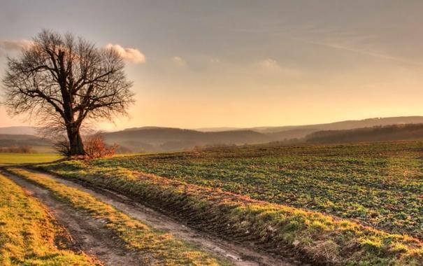 Фото обои пейзаж, природа, дерево