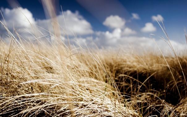 Фото обои облака, небо, солнце, лето, поле, травы, обои